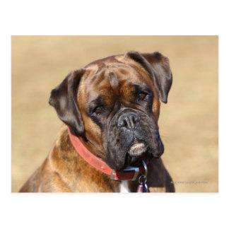 Brindle Boxer-Hund Postkarte
