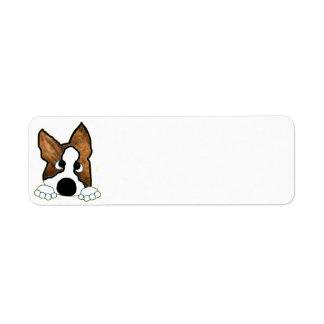 brindle und weißes Spähen Boston-Terriers