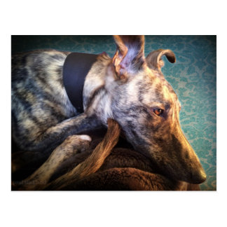 Brindled Lurcher-Windhund-Kreuz Postkarte