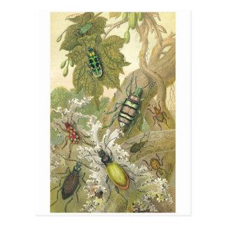 Britische Käfer Postkarte