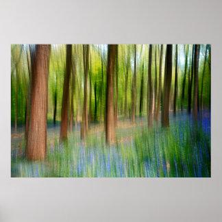 BRITISCHES England | Bluebell-Eichen-Waldland im Poster