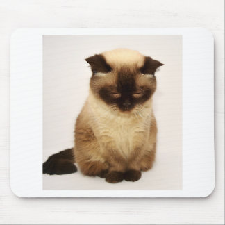 Britisches Shorthair Katzen-Haustier Mieze Mousepad
