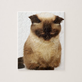 Britisches Shorthair Katzen-Haustier Mieze Puzzle