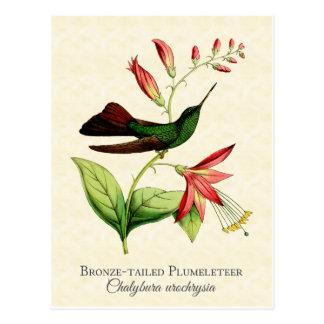 Bronze angebundene Plumeleteer Kolibri-Vintage Postkarte