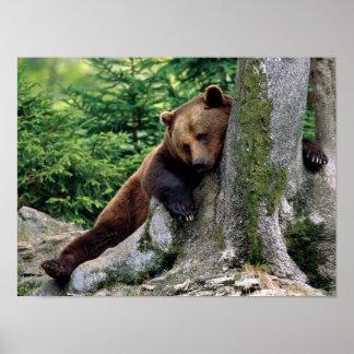 Brown-Bärn-Erholungs-STOPP DRUCK Poster