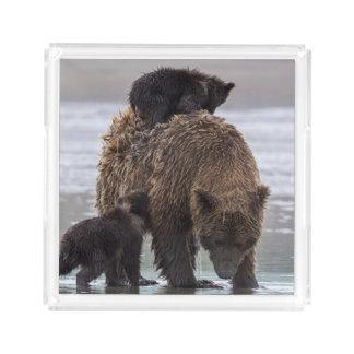 Brown Bear   Nationalpark See-Clarks Acryl Tablett