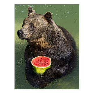 Brown Bear with Water Melon Postkarte