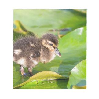 Brown-Entlein, das auf Wasserlilien-Blätter geht Notizblock