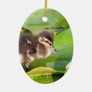 Brown-Entlein, das auf Wasserlilien-Blätter geht Ovales Keramik Ornament