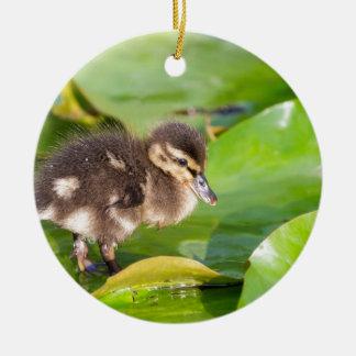 Brown-Entlein, das auf Wasserlilien-Blätter geht Rundes Keramik Ornament