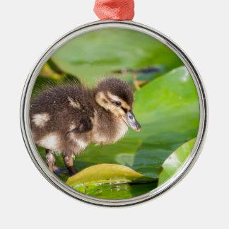 Brown-Entlein, das auf Wasserlilien-Blätter geht Rundes Silberfarbenes Ornament