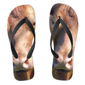 Brown-Kuh-Gesicht, Flip Flops