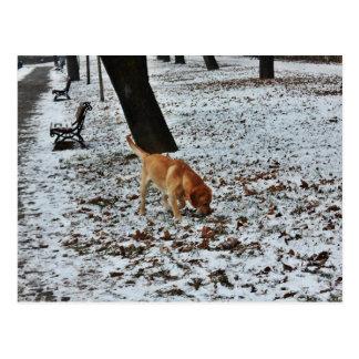 Brown Labrador im Schnee Postkarte