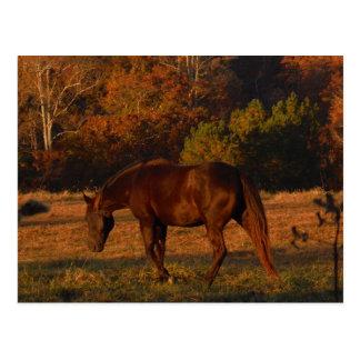Brown-Pferd auf einem Herbstgebiet Postkarte