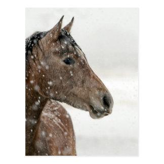 Brown-Pferd im Schnee Postkarte
