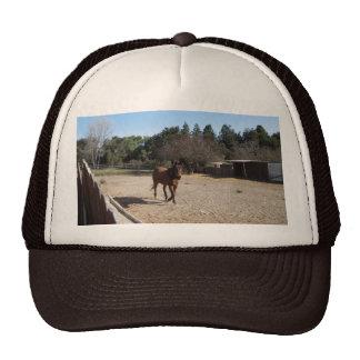 Brown-Pferd in Los Alamos, CA Netzmütze