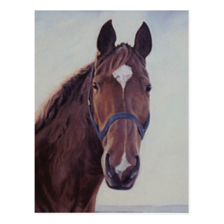 Brown-Pferd mit weißem Flecken Postkarte