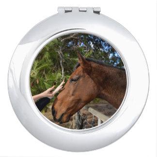 Brown-Pferd nannte Bennie ein Pat liebend, Schminkspiegel