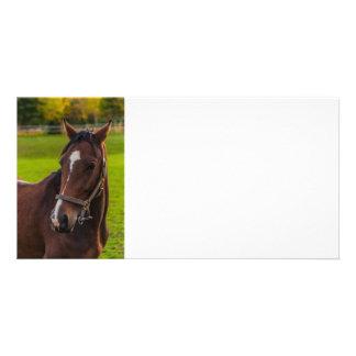 Brown-Pferdeporträt Photokarten