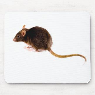 Brown-Ratte Mauspads