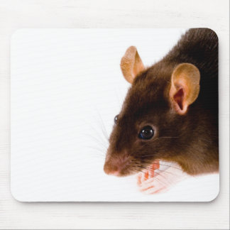 Brown-Ratte Mousepad
