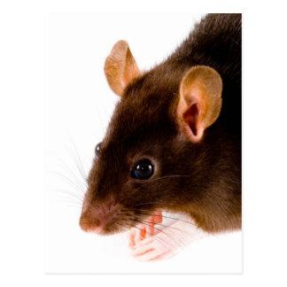 Brown-Ratte Postkarte