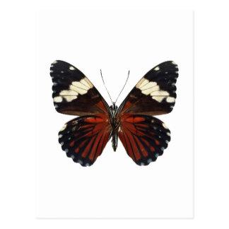 Brown-Schmetterling auf irgendeiner Farbe Postkarte
