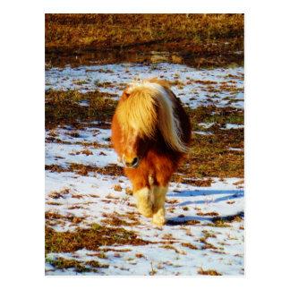 Brown- und Crememiniaturpferd im Schnee Postkarte