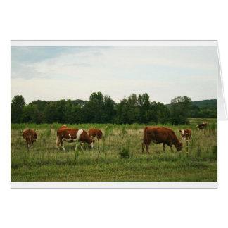 Brown und weißes Hereford Vieh Karte