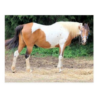 Brown und weißes Pferd mit einem hellblauen Zaum Postkarten