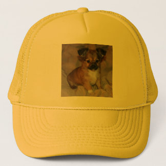 Brown-Welpe auf orangegelber Kappe
