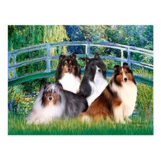Brücke die Shetlandinseln-Schäferhund-(vier) - Postkarte