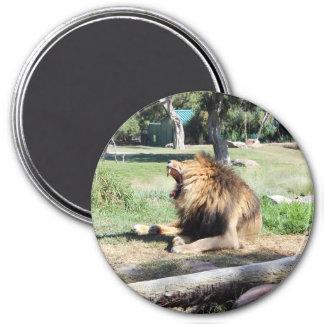 Brüllen! Brüllender Löwe! Runder Magnet 7,6 Cm