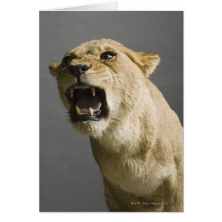 Brüllende Löwin Karte
