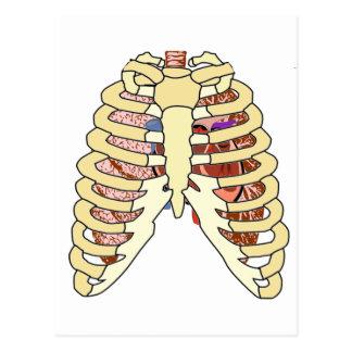 Brustkorb-Lungen u. Herz Postkarte