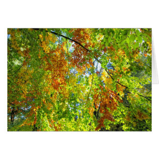 Buchen-Herbst-Blätter Karte