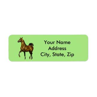 Bucht-Araber-Pferd