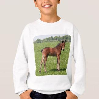 Bucht-Fohlen Sweatshirt