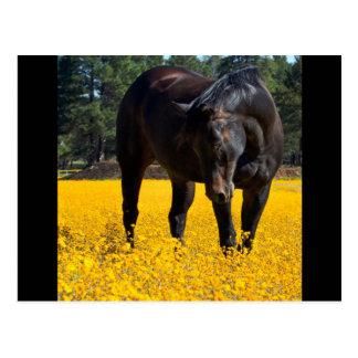 Bucht-Pferd auf einem Gebiet der gelben Blumen Postkarte