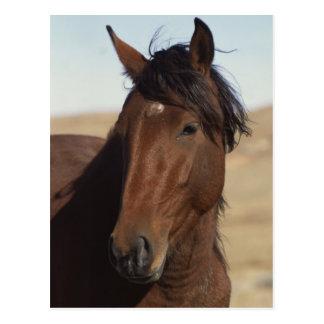 Bucht-Pferd im Wind Postkarte