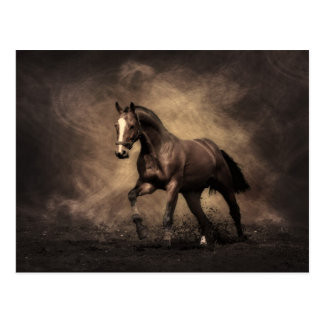 Bucht-Pferd Postkarte
