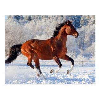 Bucht Trakehner Stallion Postkarte