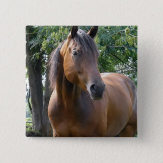 Buchtthoroughbred-Pferdequadrat-Button Quadratischer Button 5,1 Cm