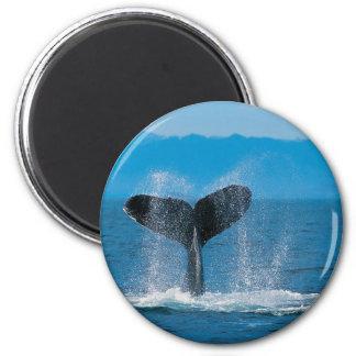 Buckel-Wal Runder Magnet 5,7 Cm