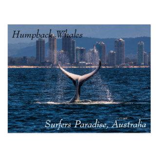 Buckel-Wal-Schwanz-Plattfisch weg vom Postkarte