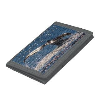 Buckel-Wal-Schwanz-Plattfischsurfers-Paradies