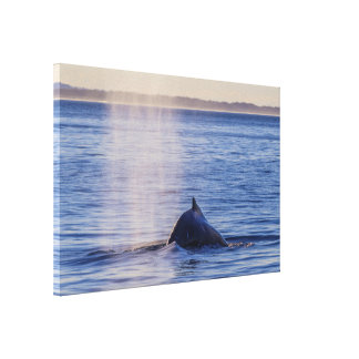 Buckel-Wal-Sonnenuntergang-Surfer-Paradies Leinwanddruck