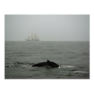 Buckel-Wal und hohe Schiffs-Postkarte Postkarte