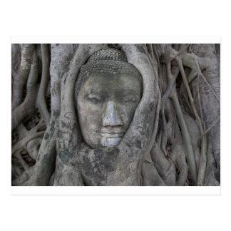 Buddha in tree.jpg postkarte