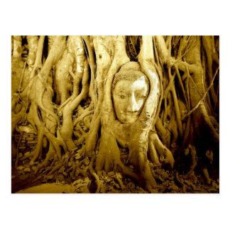 Buddha-Kopf, der in der Feige verwickelt wird, Postkarte